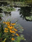 Monet's Lily Pads, Giverny